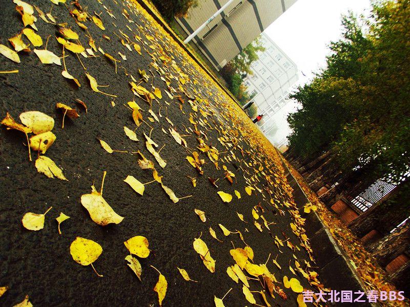 DSCF2641_副本.jpg