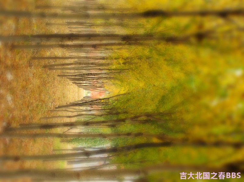 DSCF2693_副本.jpg