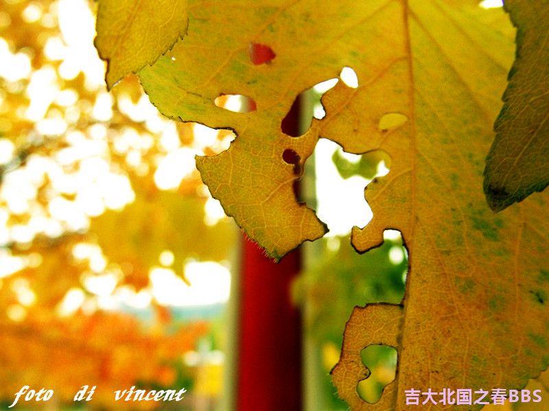 DSCF2842_副本.jpg