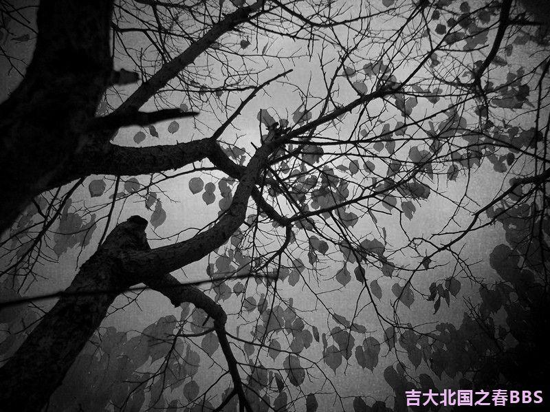 DSCF2916_副本.jpg