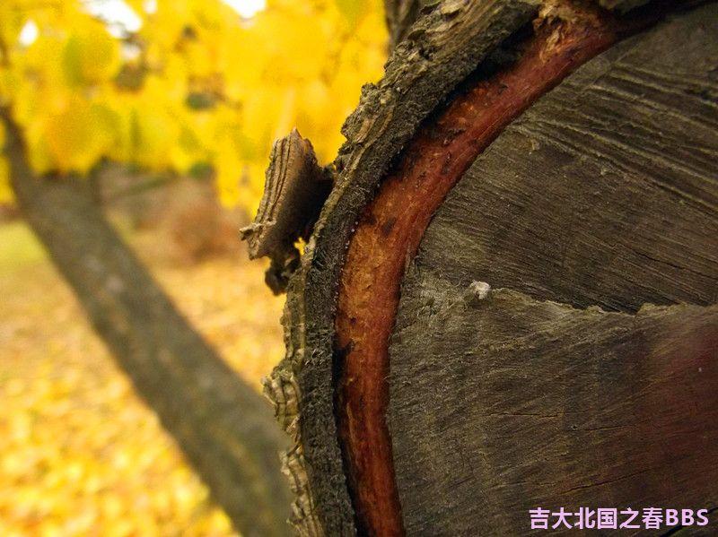 DSCF2960_副本.jpg