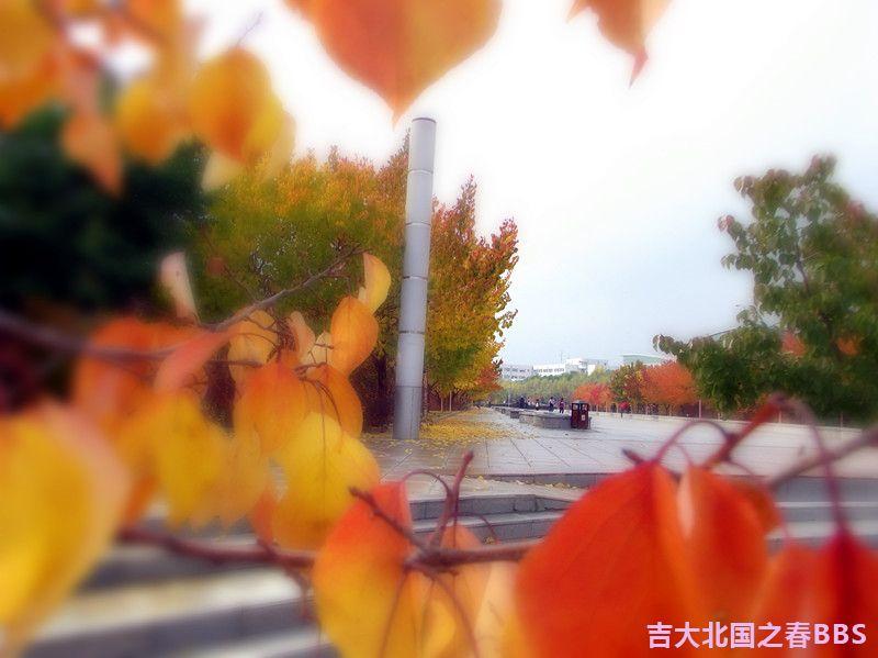 DSCF3101_副本.jpg