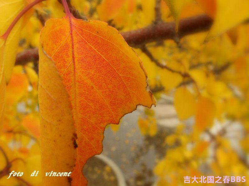 DSCF3160_副本.jpg